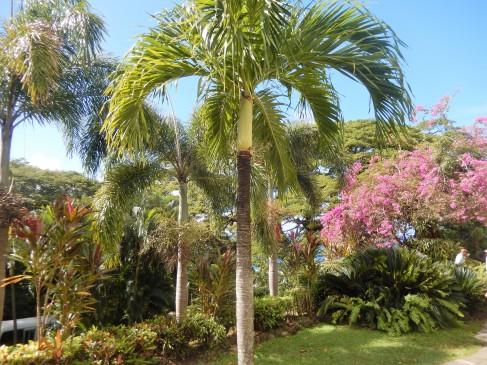 408 St Kitts