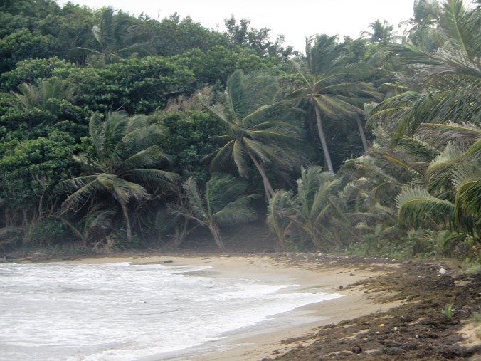 604 Humacao Nature Reserve